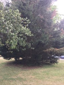 Image of the tree I cried in